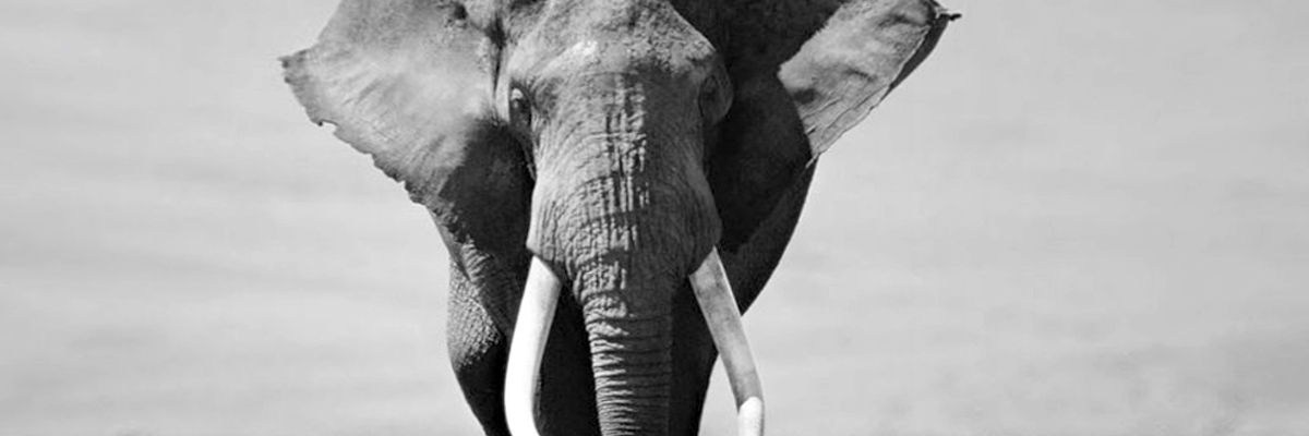 The new white elephant in marketing